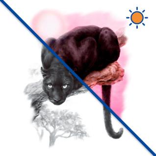 Diseño Transfer Black Panther