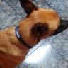 Collar para perro con cierre rápido - En uso