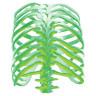 Diseño Transfer Glow Bones - Espalda - Sobre tejido blanco