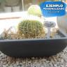 Señales de jardín para sublimación de 175 mm - Ejemplo personalizado identificador planta
